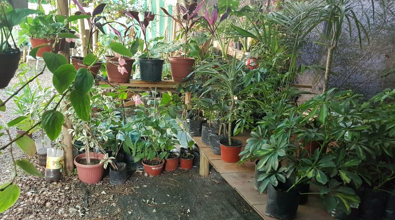 Cascanueces vivero de plantas turismo salamanca for Viveros salamanca